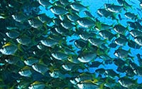 Schede dei pesci